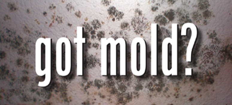 mold-a-hidden-danger-in-your-home- disease- ill carpet rug furniture Illness